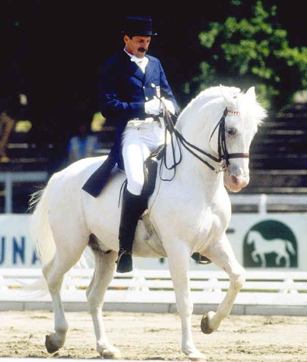 Cavallo Lipizzano