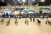 dairy show1