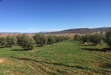 Dégradation des sols en régions arides