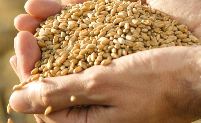 Adapter les semences à l'environnement de production