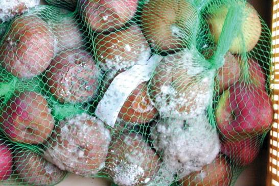 Pommes, conservation et qualité