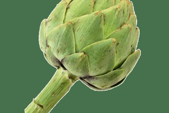 Maraîchage : Multiplication artichaut par semences