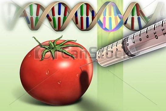 Maraîchage : Tomate et génétique