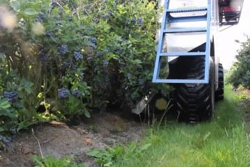 Machine de récolte des myrtilles