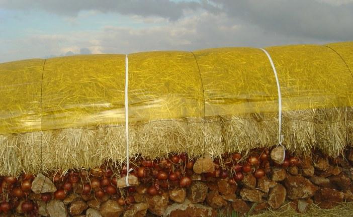 Conservation traditionnelle de l'oignon dans la province d'El Hajeb