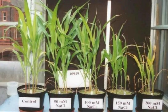 Les plantes face au stress hydrique et salin