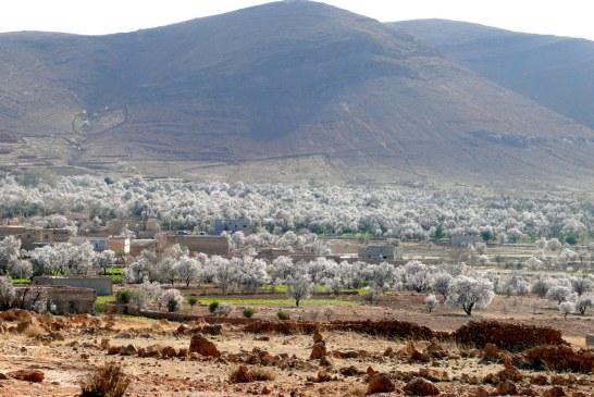 Amandier : Qualité et valorisation du fruit des populations locales