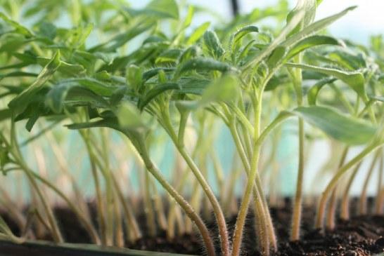 Pépinières: plus d'exigences, plus de technicité pour des plants de qualité