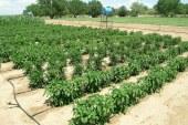 Les plantes face aux différents stress