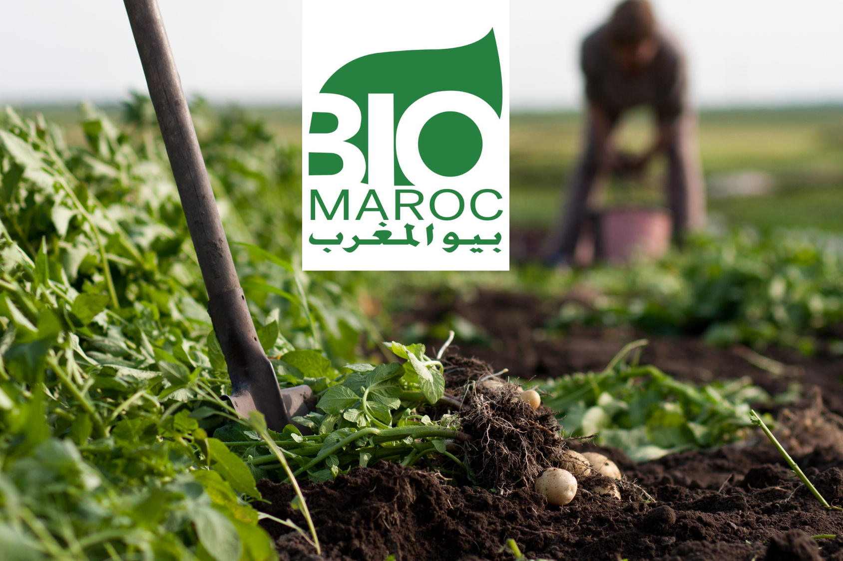 Grande conférence sur l'Agriculture Biologique à Marrakech