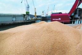 Les importations alimentaires, véritable miroir des faiblesses structurelles de l'agriculture marocaine