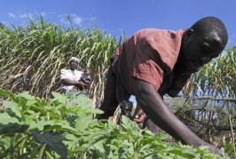 «En Afrique, l'agriculture moderne laisse de côté les masses paysannes»
