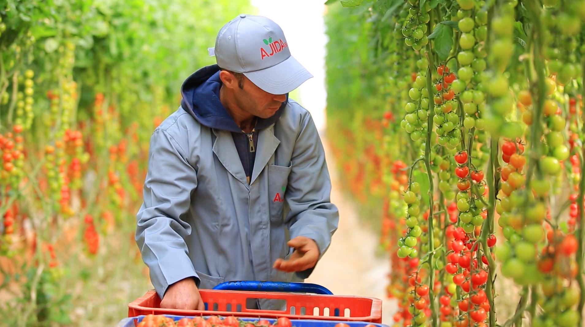 Tendances du marché mondial de la tomate