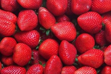 Symposium international 2020 sur les fraises, sujets et conférenciers officiellement annoncés
