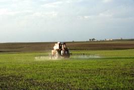 Désherbage : un enjeu majeur dans la production des céréales
