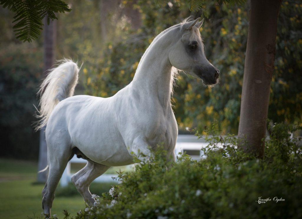 عالم الخيول الفرق بين الحصان والفرس والمهر والجحش والفحل