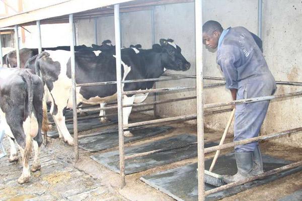 Dairy-farming-in-Kenya