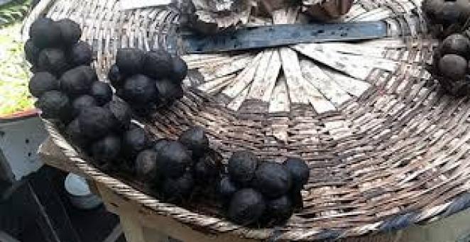 Benefits of African Walnut 1