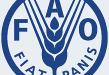 FAO Jobs and News