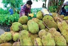 Kerala gets an official fruit - jackfruit 1