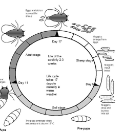 photos of life cycle of cockroach wikipedia [ 1027 x 814 Pixel ]