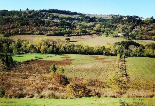 L'azienda agricola sperimentale Montepaldi