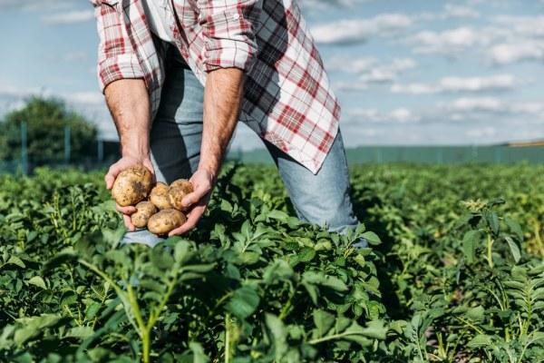 Un coltivatore di patate mostra i prodotti