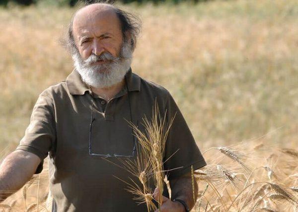 Gino Girolomoni nel campo di grano
