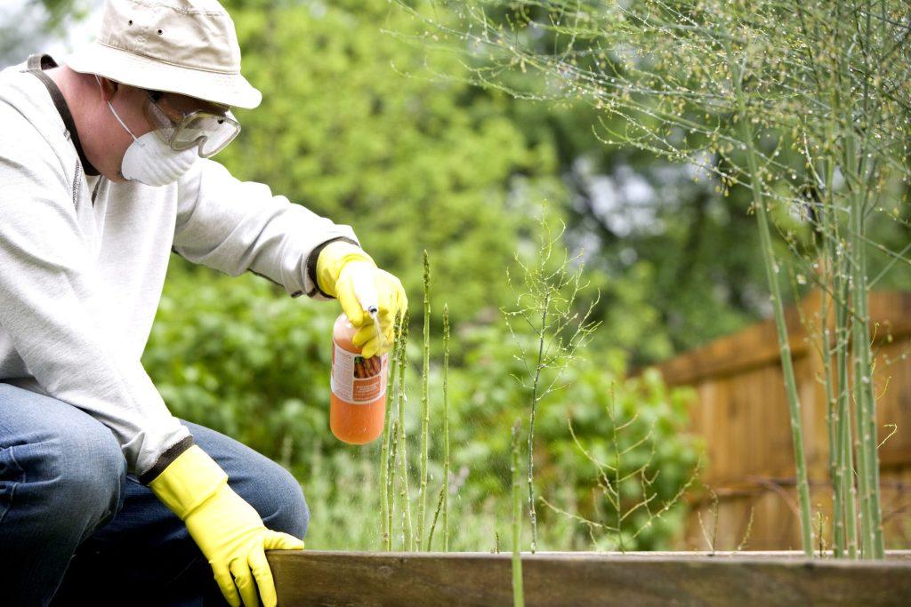 Un uomo irriga il proprio campo con dei pesticidi