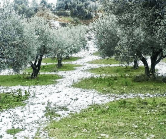 Neve tra gli ulivi
