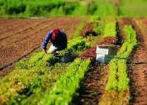 PSR CAMPANIA 2014 - 2020 misura 6.1 insediamento giovani in agricoltura