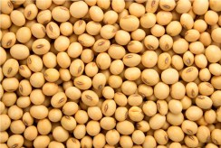 Image result for soyabean