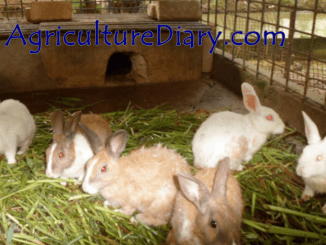 image showing Rabbit Farming