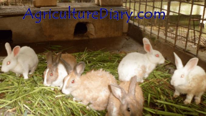image showing Rabbit Farming