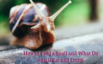 Snail Farming Business: How To Feed a Snail And What Do Snails Eat and Drink