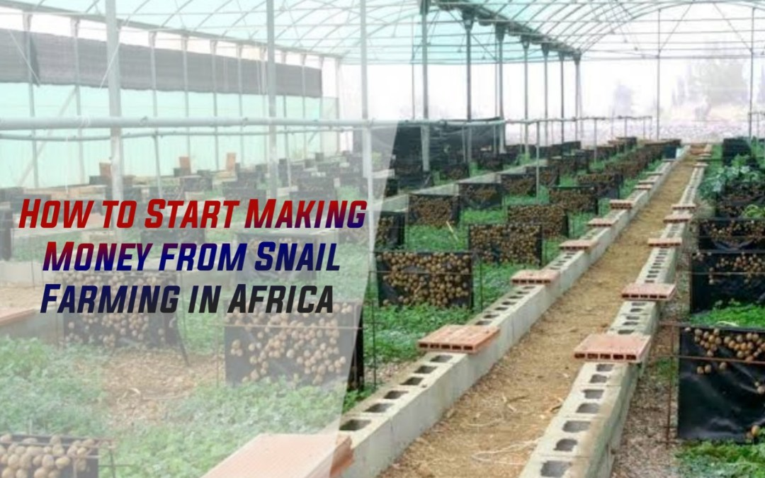 Snail Farming: How to Start and Make Money From Snail Farming in Africa