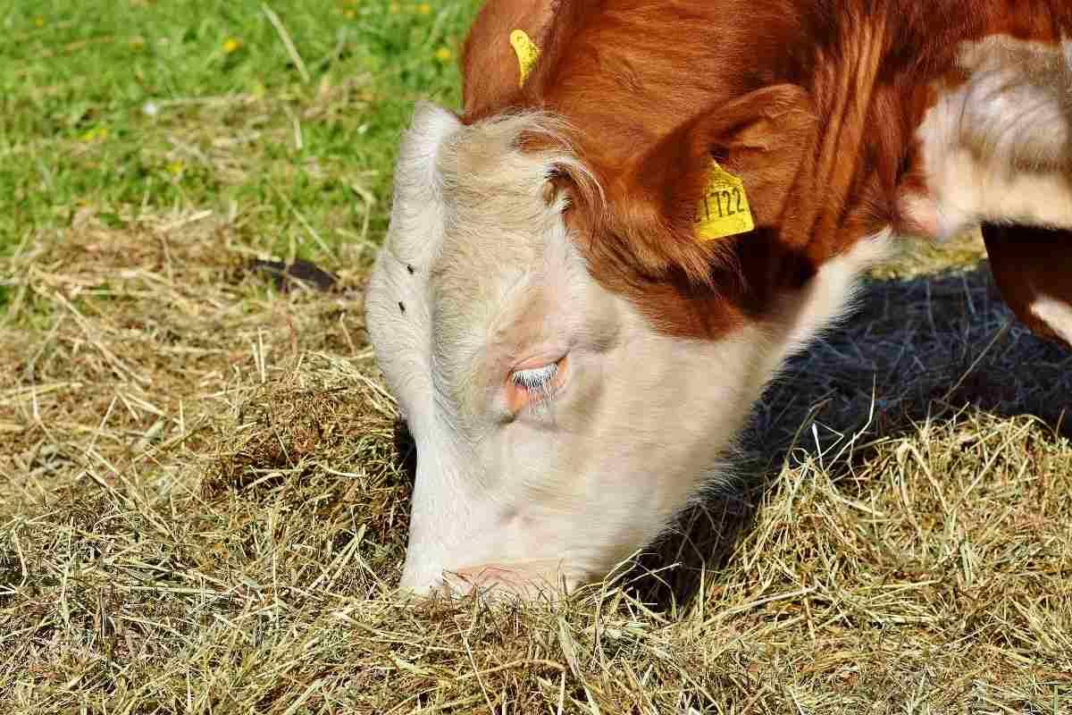 Steps To Start a Dairy Farming in Kenya