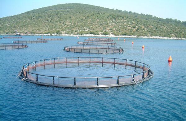 Types of aquaculture