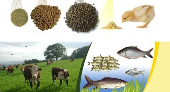 Integrated pig- fish farming : agri learner