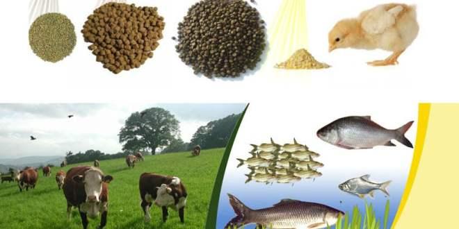 Livestock - Fish Integrated Farming System
