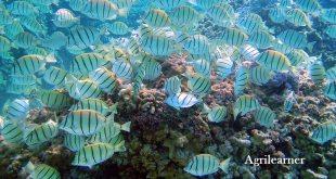 Marine fisheries