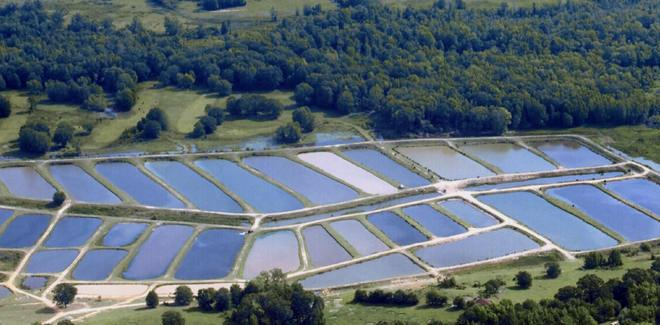 Fish culture in Lakes