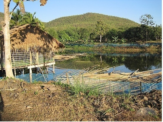 Cattle - Fish Integrated Farming System