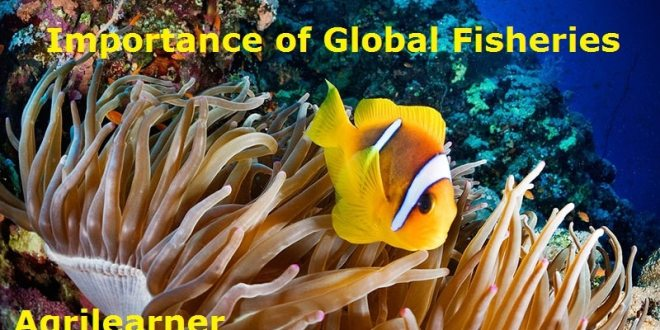 Importance of Global Fisheries