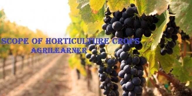 Scope Of Horticulture Crops
