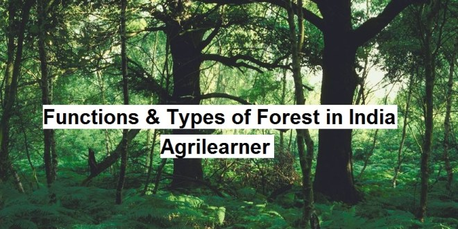 Functions & Types of Forest
