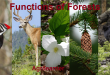 Functions of Forests