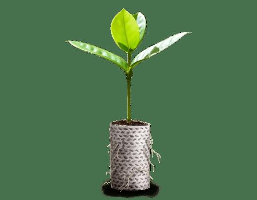 Carta Ellepot per Paperpot Agrimedia