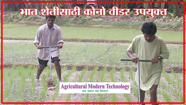भात शेतीसाठी कोनो वीडर उपयुक्त