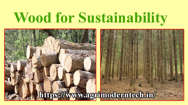 Wood for Sustainability
